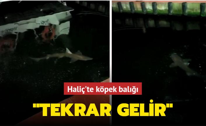 Haliç'te köpek balığı görüntüledi