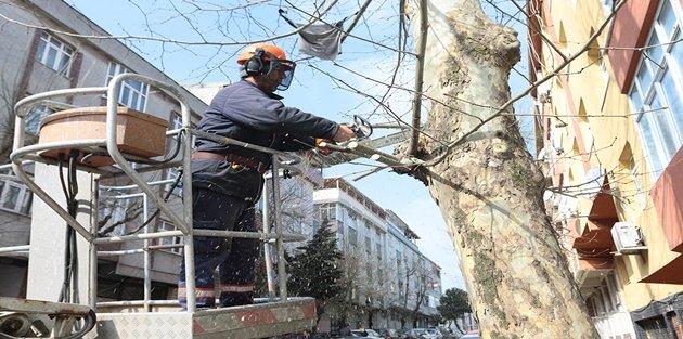 Gaziosmanpaşa'da Ağaç Budama Çalışmalarının Sonuna Yaklaşıldı