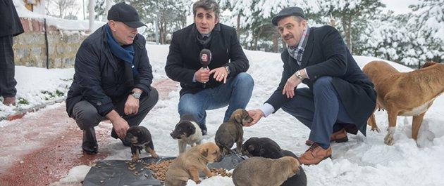 Kara kışta sokak hayvanları Gaziosmanpaşa da unutulmadı