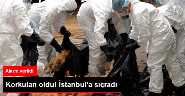 Korkulan oldu! İstanbula sıçradı