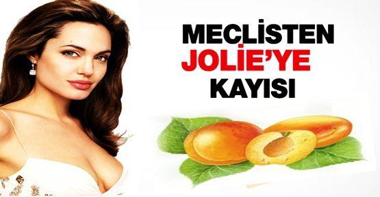 Angelina Jolie^ye malatya kayısısı ile ilgili görsel sonucu