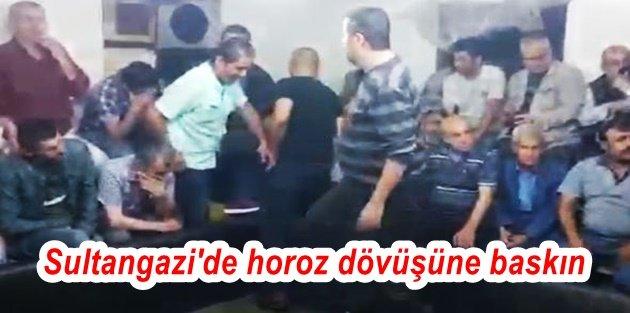 Sultangazi'de horoz dövüşüne baskın