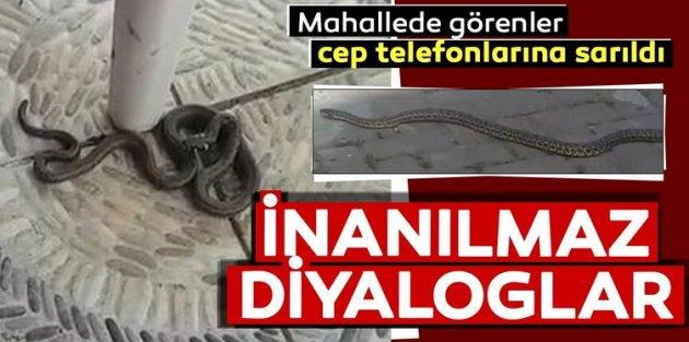 Sultangazi'de yılanlar evlere kadar girdi