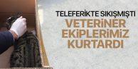 Eyüp'te Veteriner Ekipleri kedinin imdadına yetişti