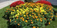 Gaziosmanpaşa Çiçeklerle Rengârenk