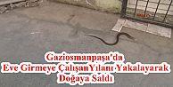 Gaziosmanpaşa'da Eve Girmeye Çalışan Yılanı Yakalayarak Doğaya Saldı