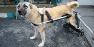 Gaziosmanpaşa'da Geri Dönüşüme Ayrılan Beyaz Eşyalar Felçli Köpeklere Yürüteç Oluyor
