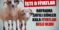 İstanbul'da kurbanlık fiyatları belli oldu