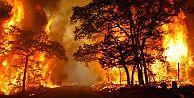 İstanbul'da orman yangını