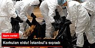 Korkulan oldu! İstanbul'a sıçradı