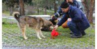 Sultangazi'de Sokak Hayvanlarına Yem Bırakıldı