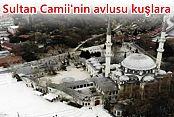 Eyüp Sultan Camii'nin avlusu kuşlara kaldı