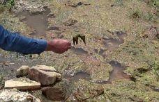 Alibeyköy barajında akan dere tehlike saçıyor