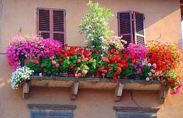 Gaziosmanpaşa En Güzel Çiçekli Balkonunu Seçiyor