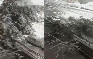 Sultangazi'de ağaç otomobilin üstüne devrildi!