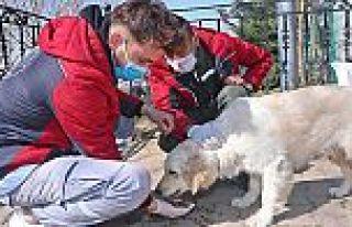 Gaziosmanpaşa'da Sokak Hayvanları Sahipsiz Değil