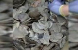 İstanbul Havalimanı'nda 1,2 ton pangolin pulu ele...