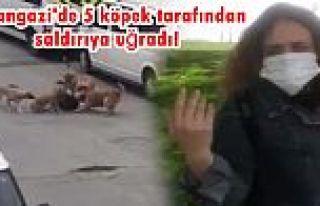 Sultangazi'de köpek dehşeti! İşe giden kadına...